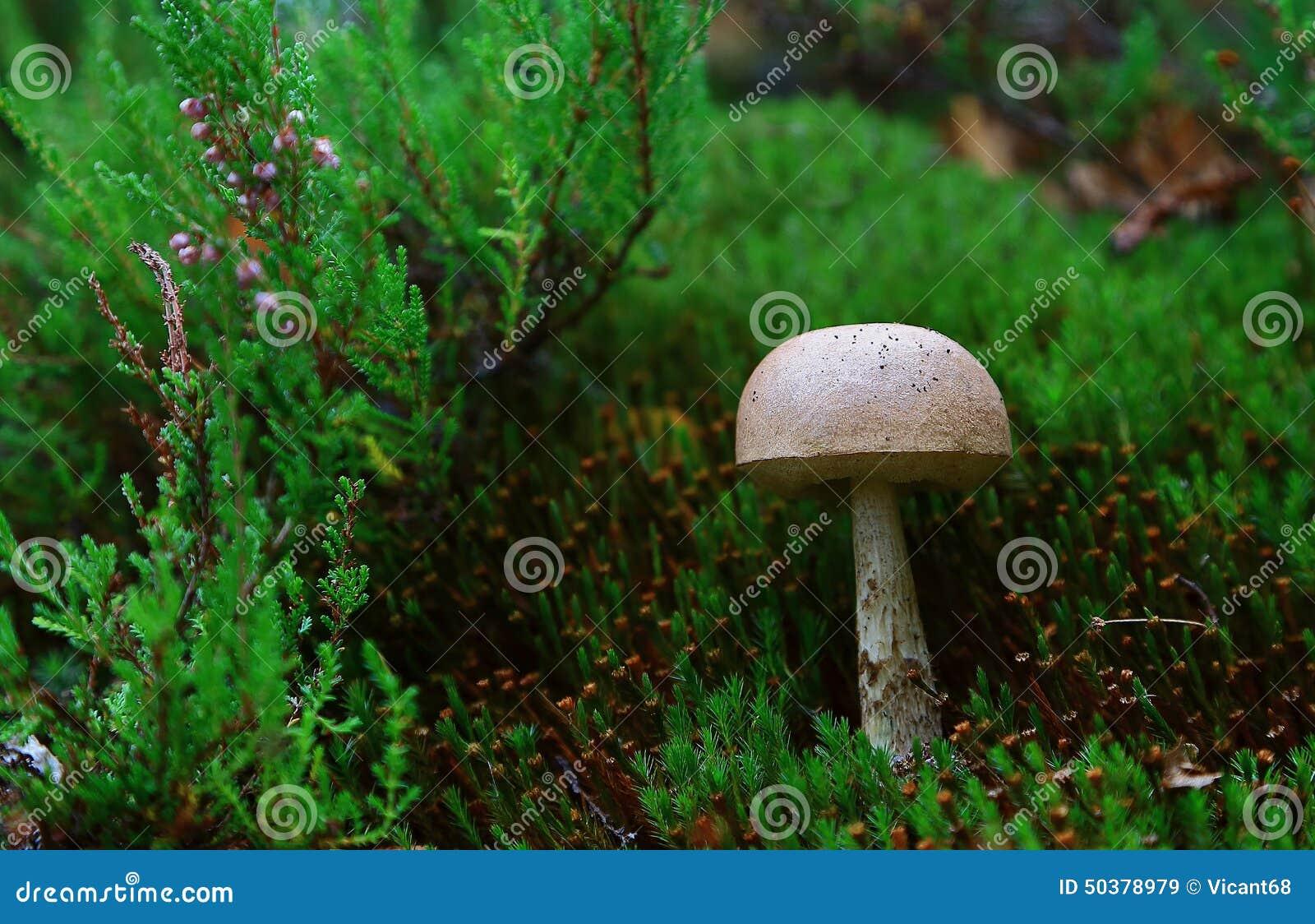 Is moss a fungus?