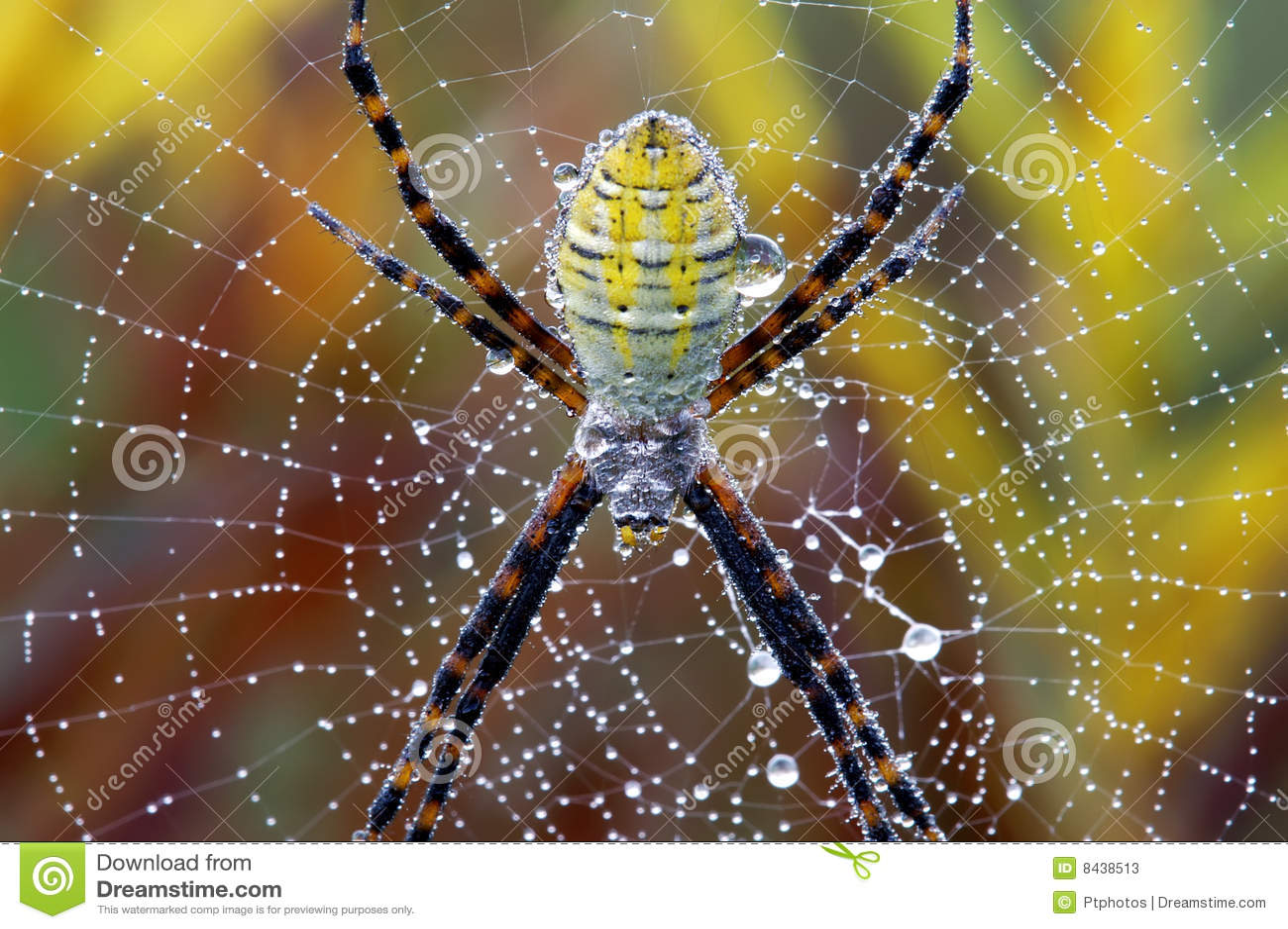 fotos jardim horizontal:Horizontal Spider Web