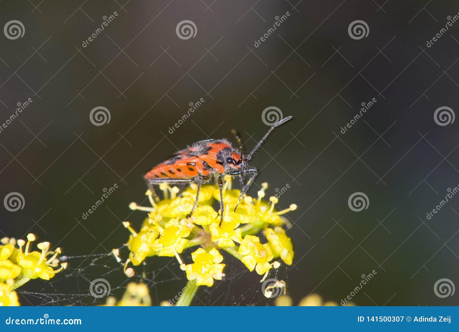 Macro image d insecte coloré sur l usine jaune