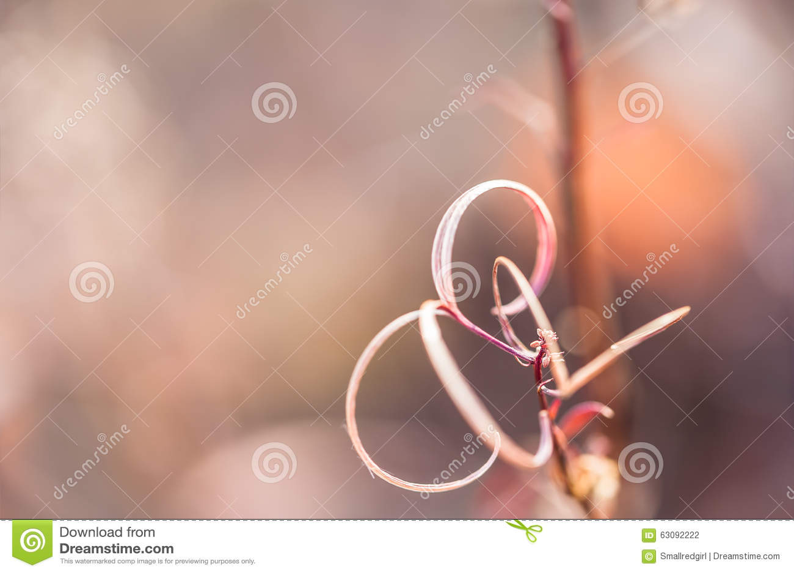 Download Macro Image Des Herbes Sauvages Photo stock - Image du jardin, instruction: 63092222