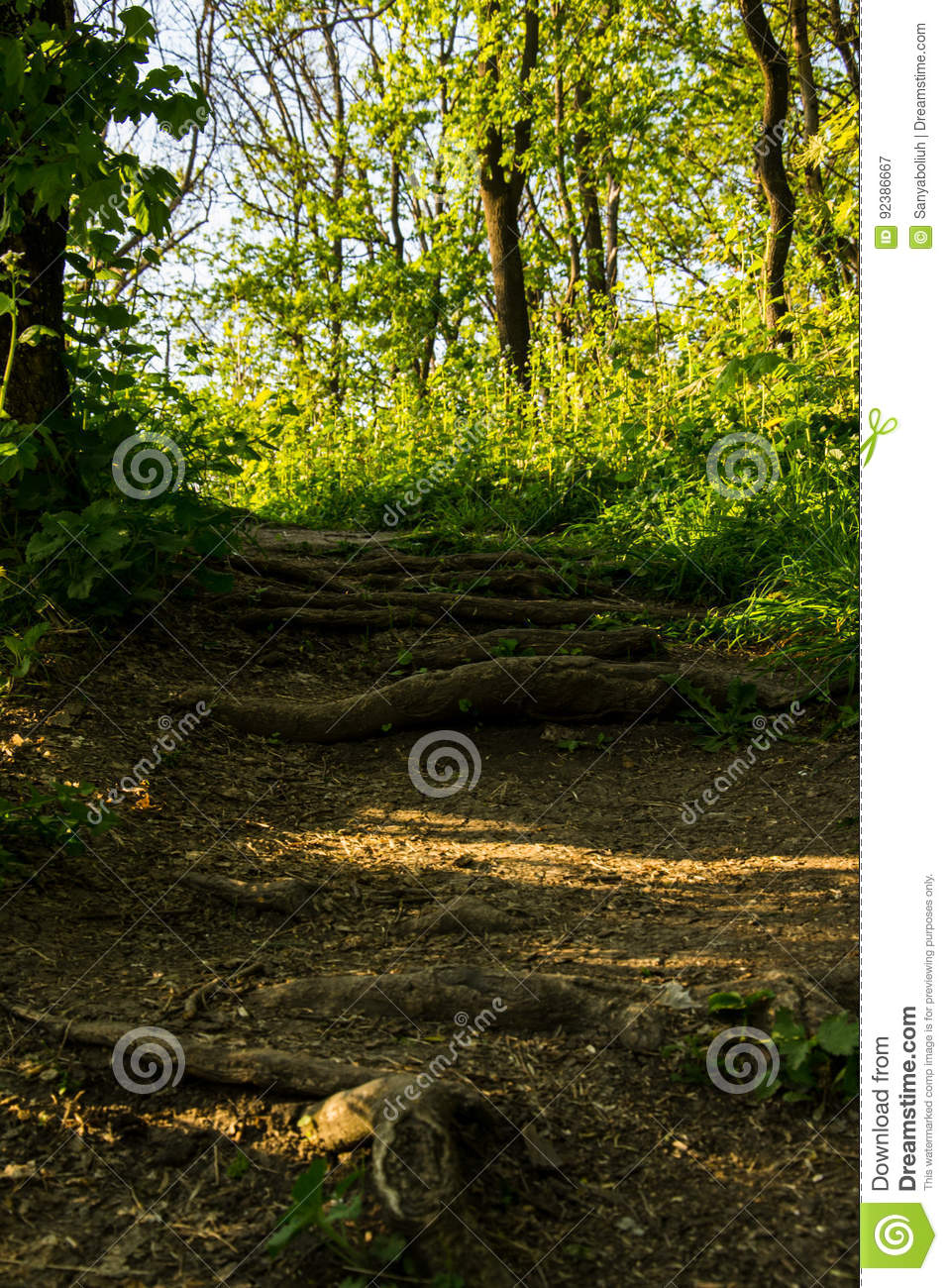 Macro Image Of The Ground Of A Forest  The Dry Beech Leaf In The