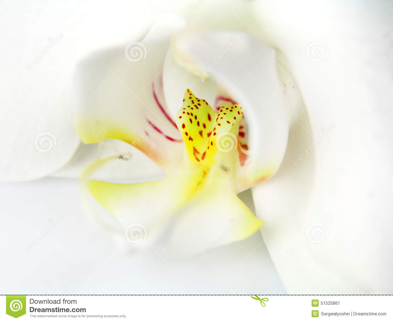 Download Macro image of orchid stock image. Image of beautiful - 51525861
