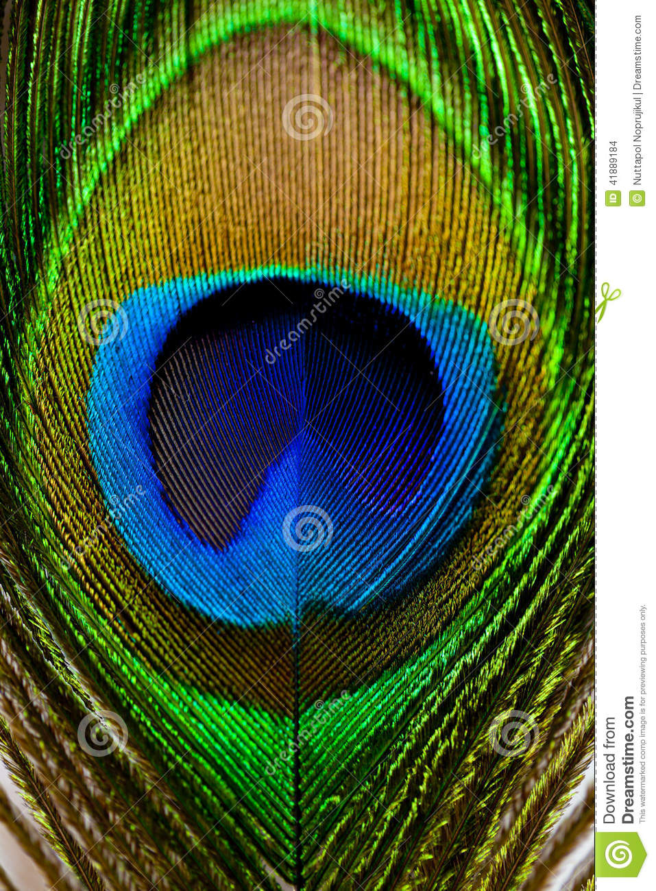 Macro Image Of Peacock Feather/Peacock Feather Stock Photo - Image: 41889184
