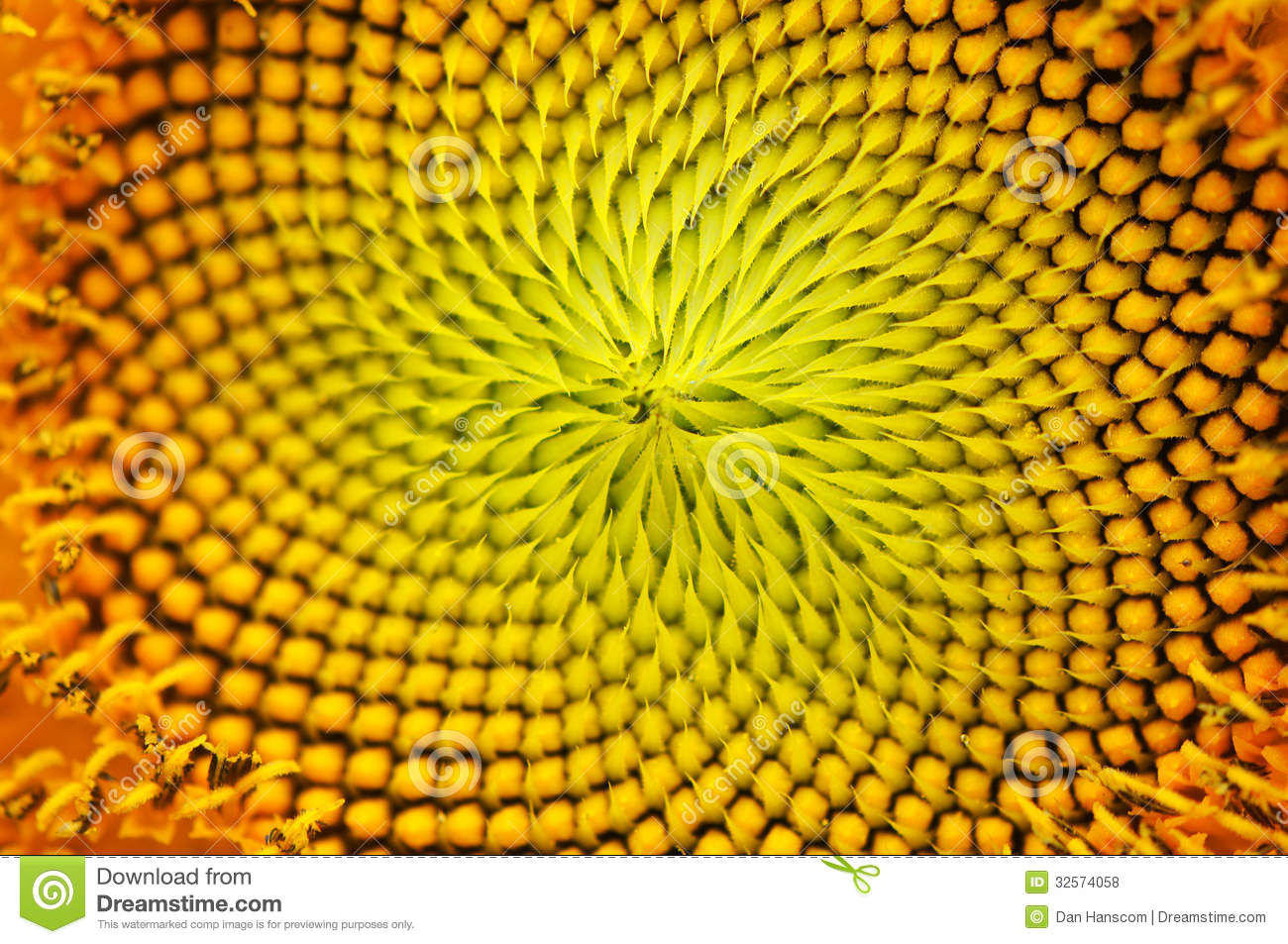 macro image of a sunflower center stock photo image of