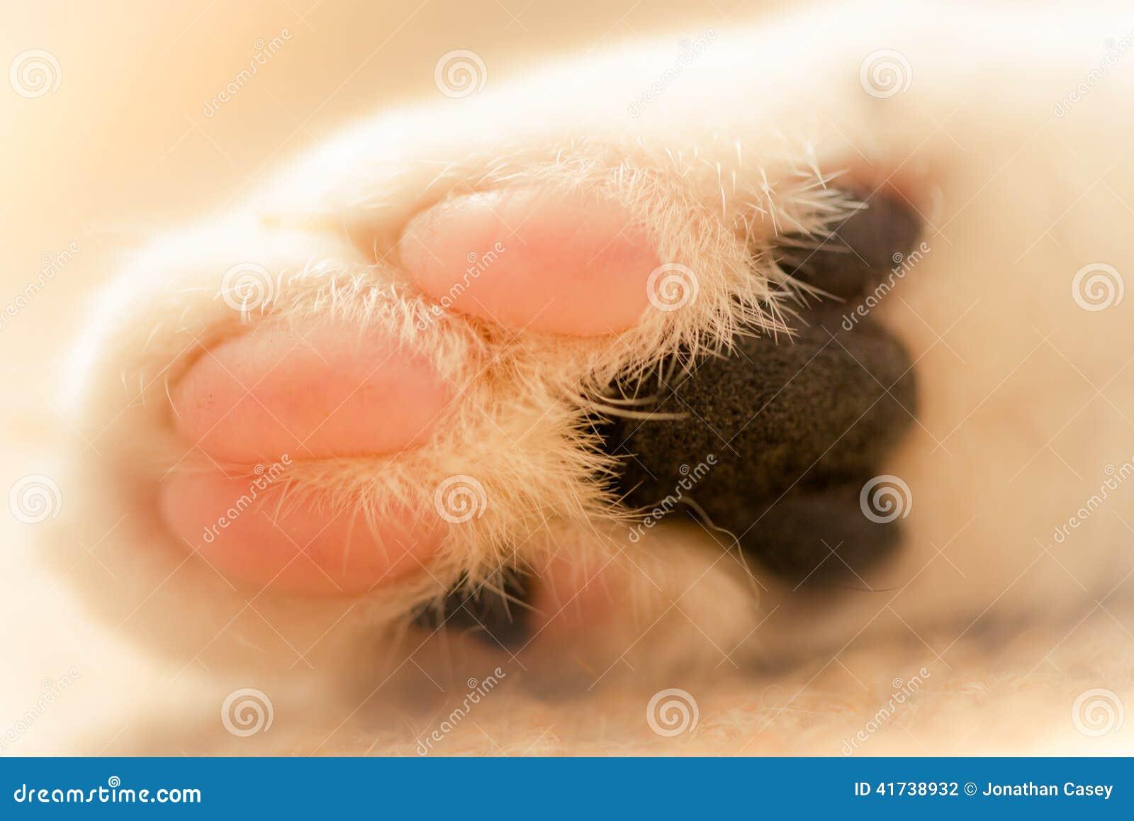 Macro immagine della zampa bianca dei gatti