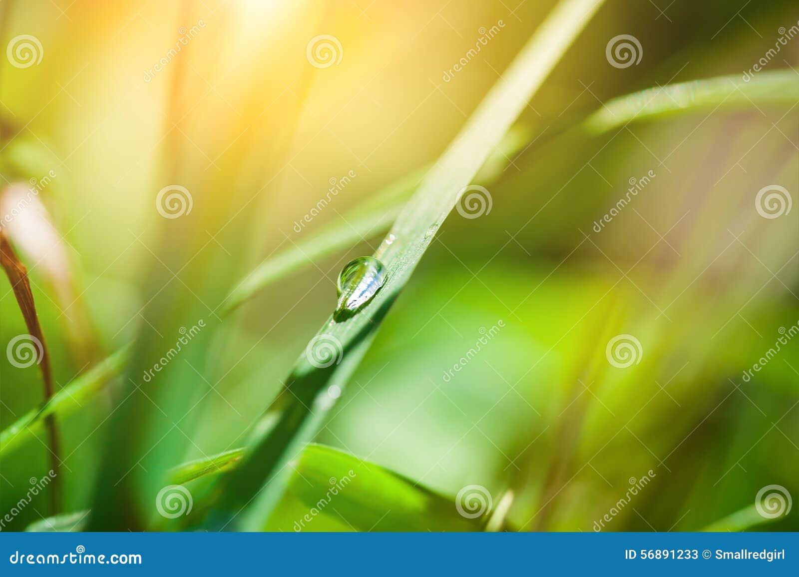 Macro immagine di goccia sull erba, fuoco selettivo