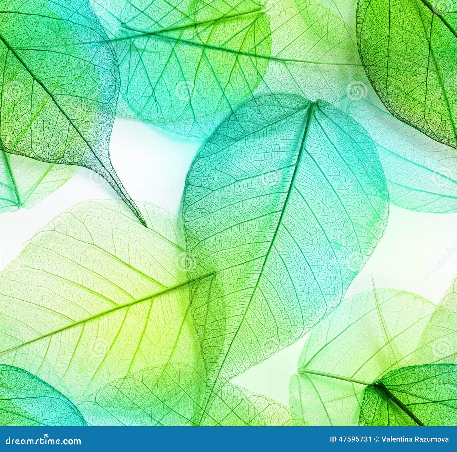 Macro leaves seamless texture