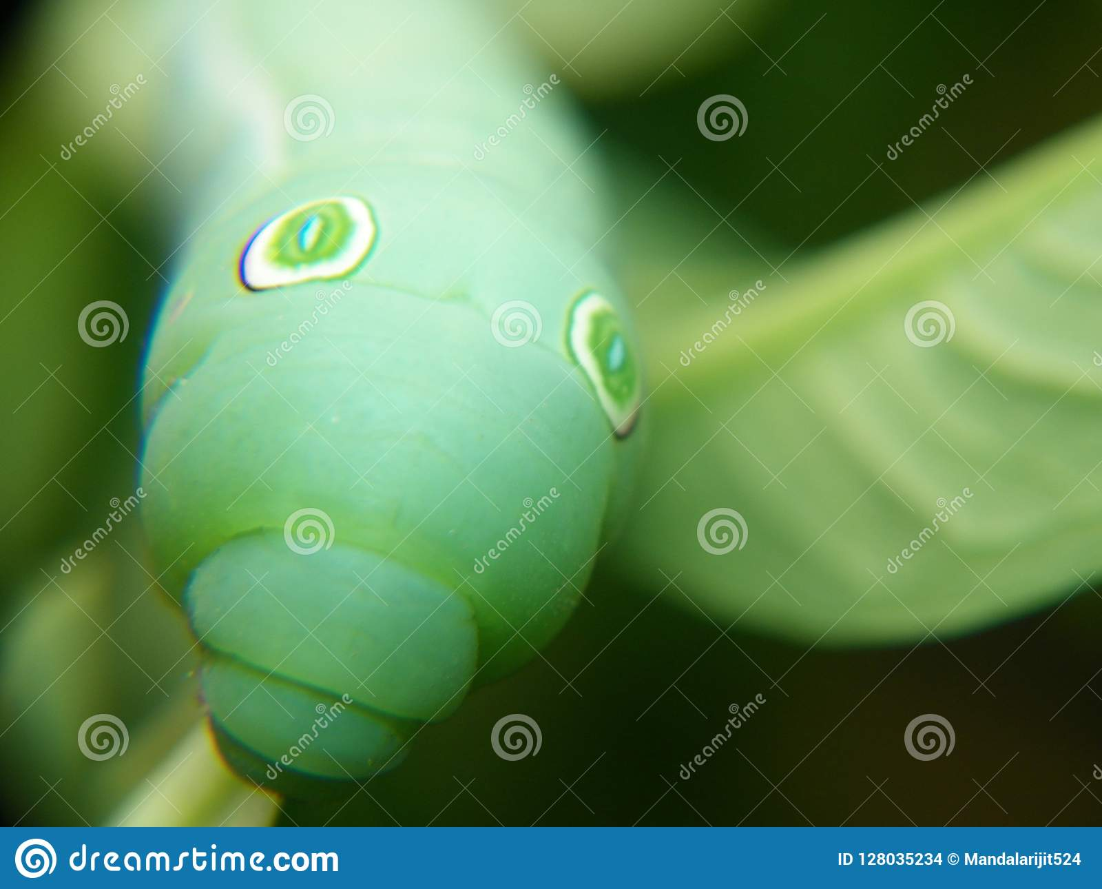 This is a macro of a little green insect