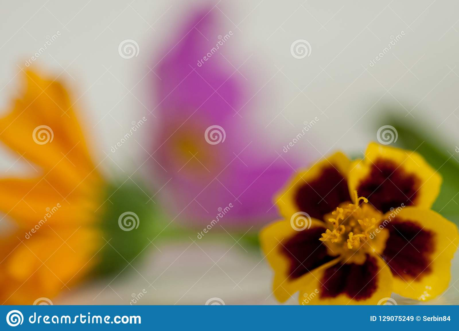 Macro marigold flower with calendula and pink flower