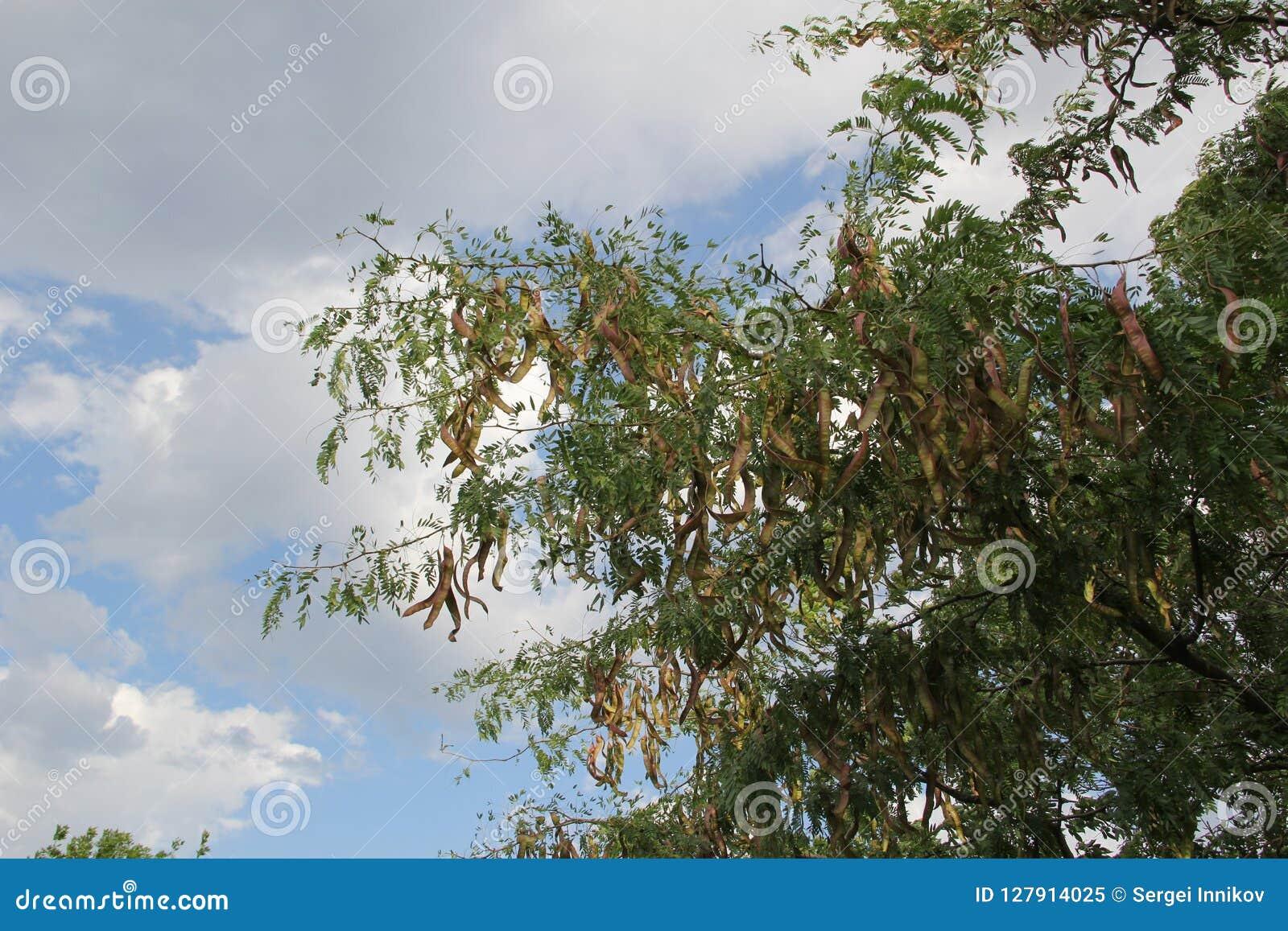 Macro Os brincos penduram na árvore