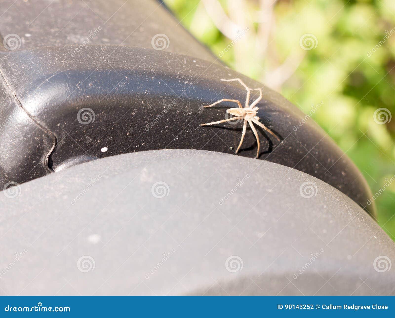 Macro público da aranha da parte superior do escaninho completamente… Luz