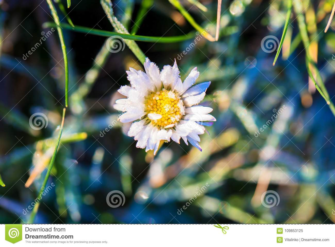 Macro Photo Of A Daisy Flower Stock Image Image Of Flora