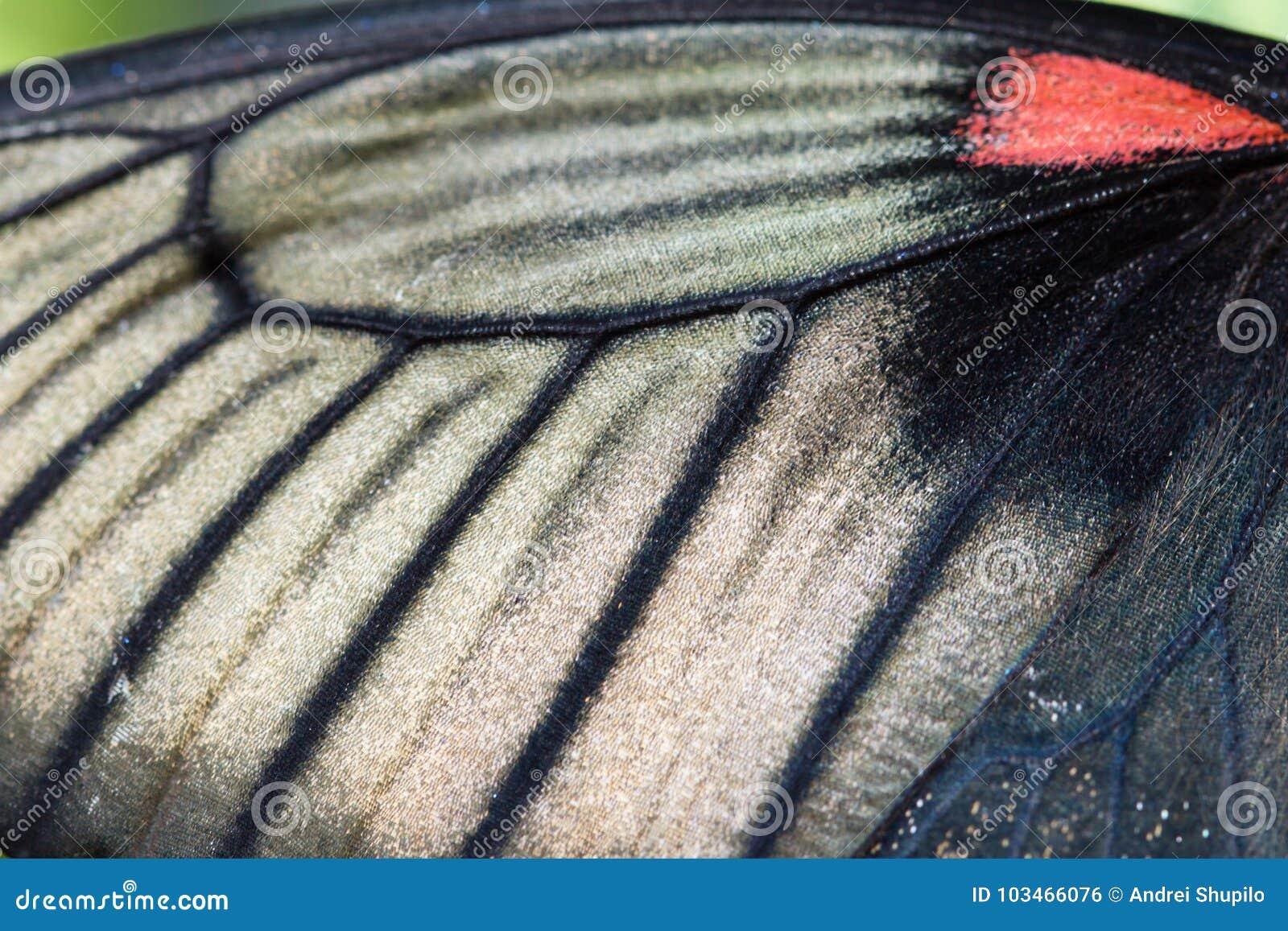 Macro photo de côté du fond d aile de papillon de morpho
