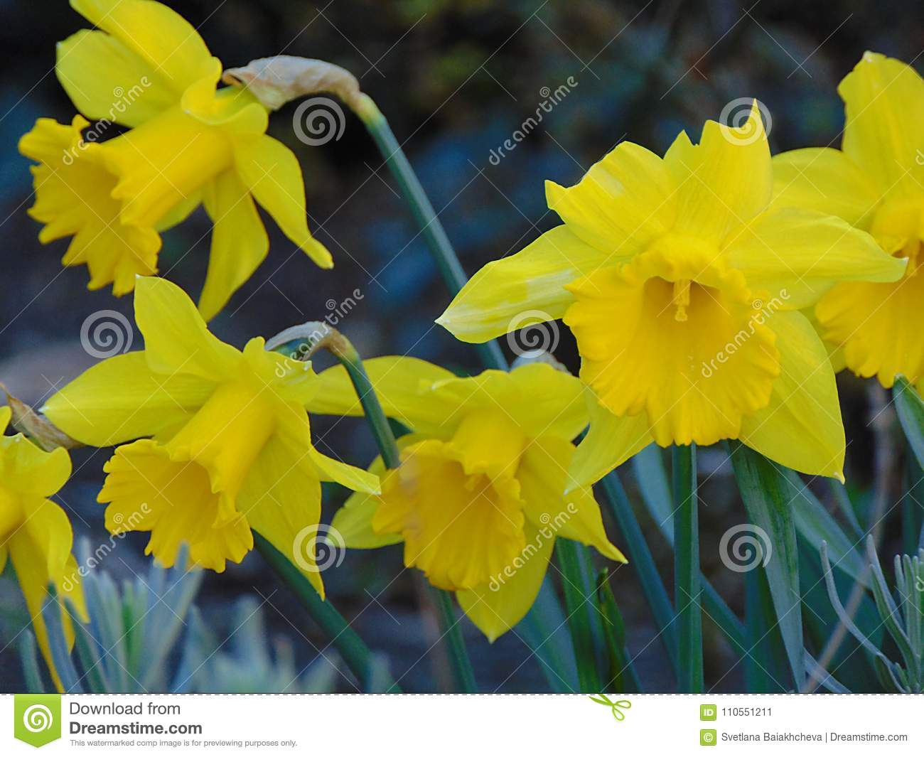 Macro Photo With A Decorative Background Of Beautiful Large Spring