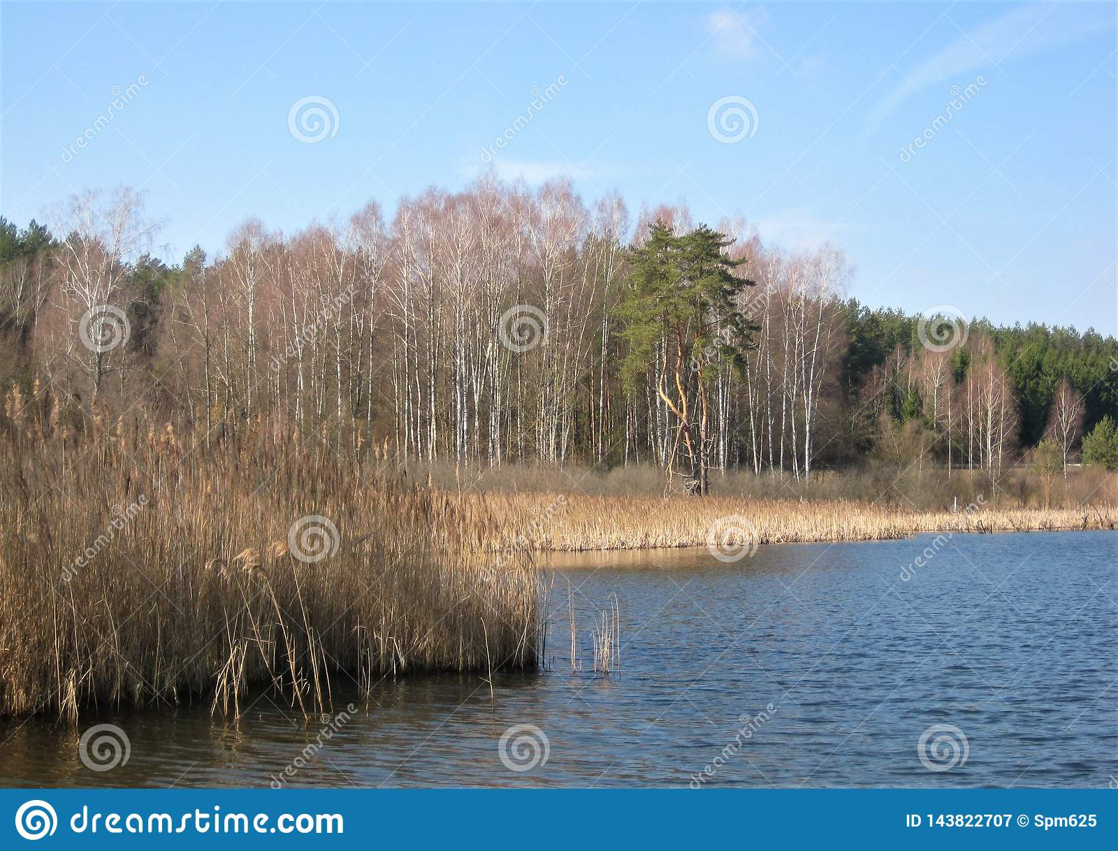 Macro photo with decorative background of spring landscape on the shore of a beautiful natural lake in the area of Lithuania