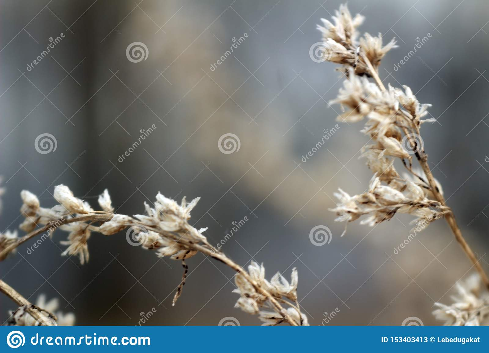 Macro photo dry flowers on brown branches