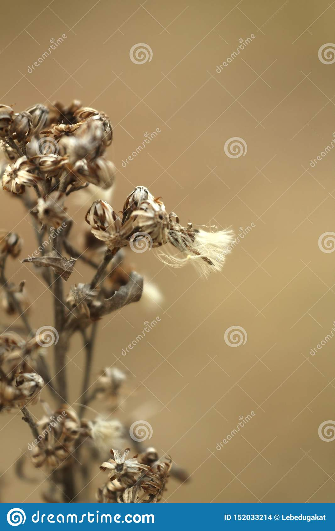 Macro photo of dry flowers grass on blurred brown