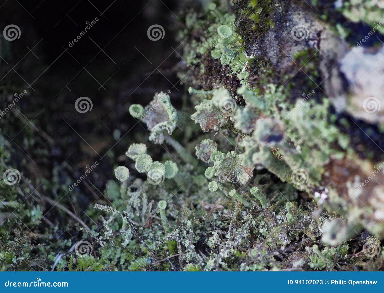 Macro photo of lichen