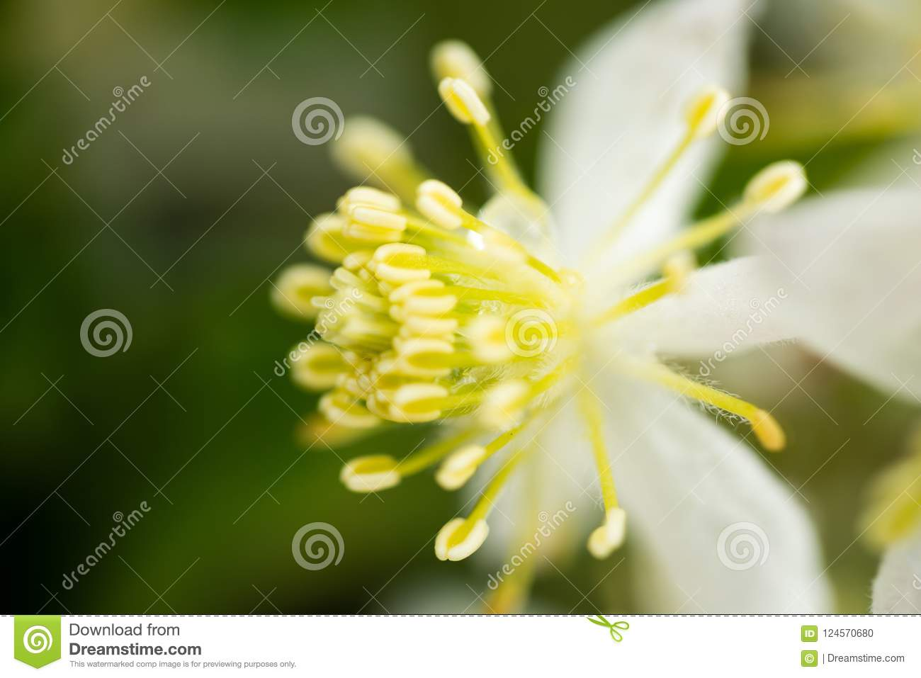 Macro Photograph Of A Small White Flower With Soft Yellow Pollen