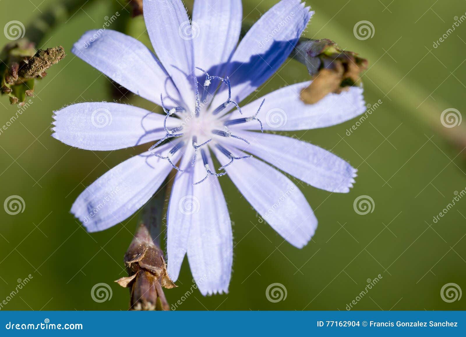 Macro photographie d une fleur