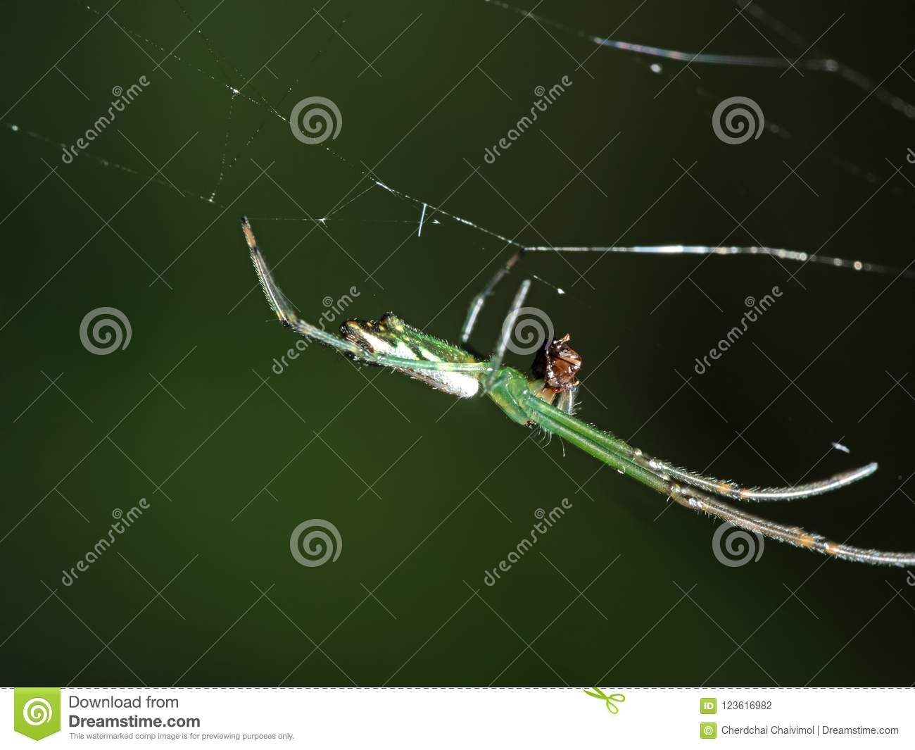 Macro Photo of Colorful Spider on Web with Prey Isolated on Blurry Background