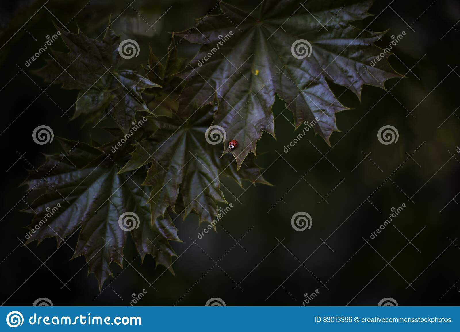 Download Macro Photography Of Tree Leaves Stock Photo - Image of ladybird, green: 83013396