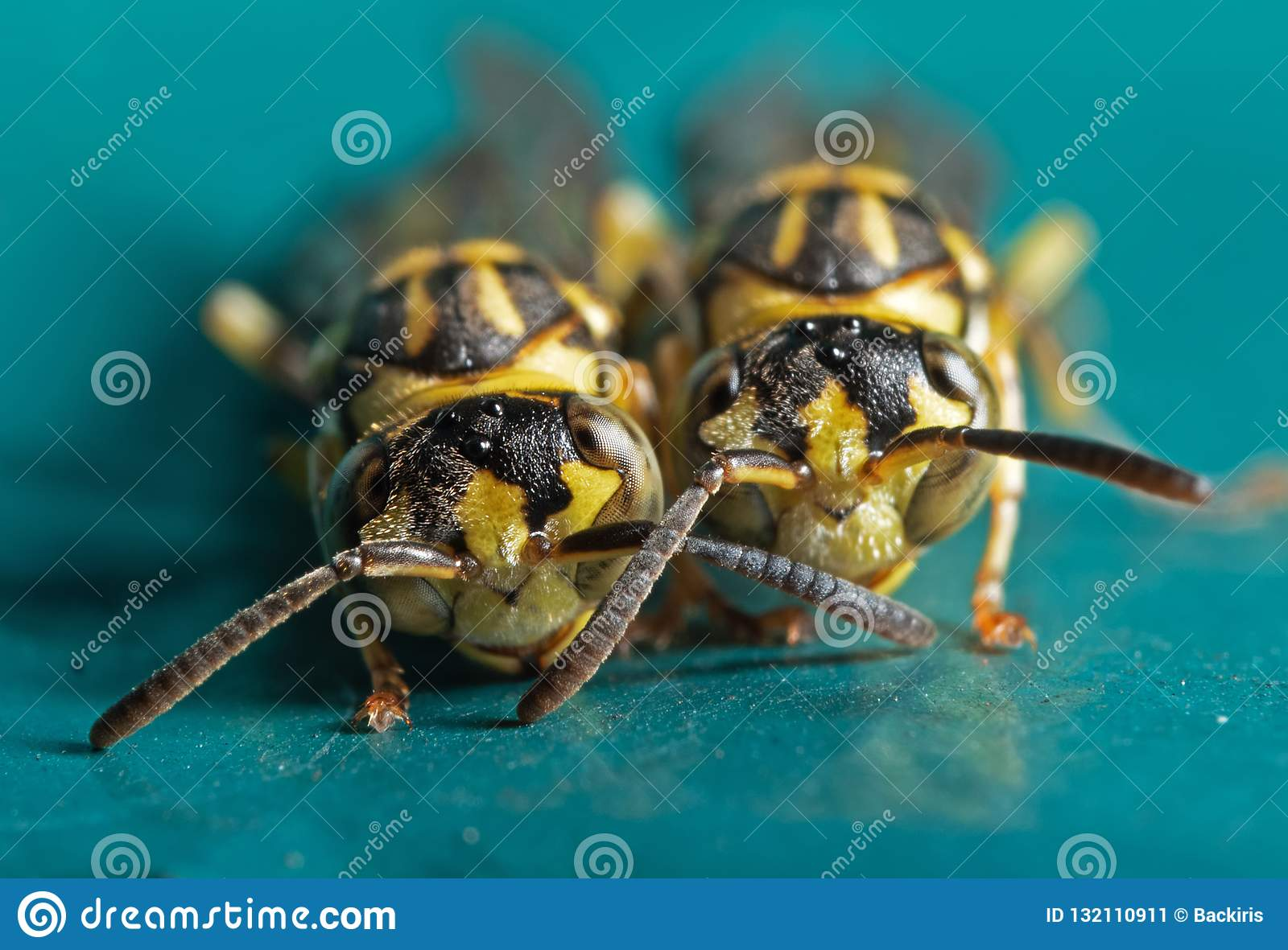 Macro Photo of Two Wasps on Blue Green Metal Material