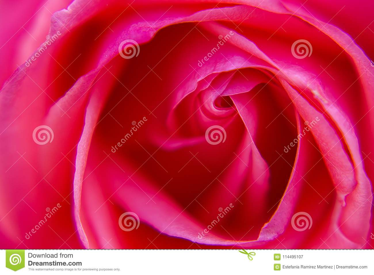 Macro pink rose flower and black background stock image image of macro pink rose flower and black background izmirmasajfo