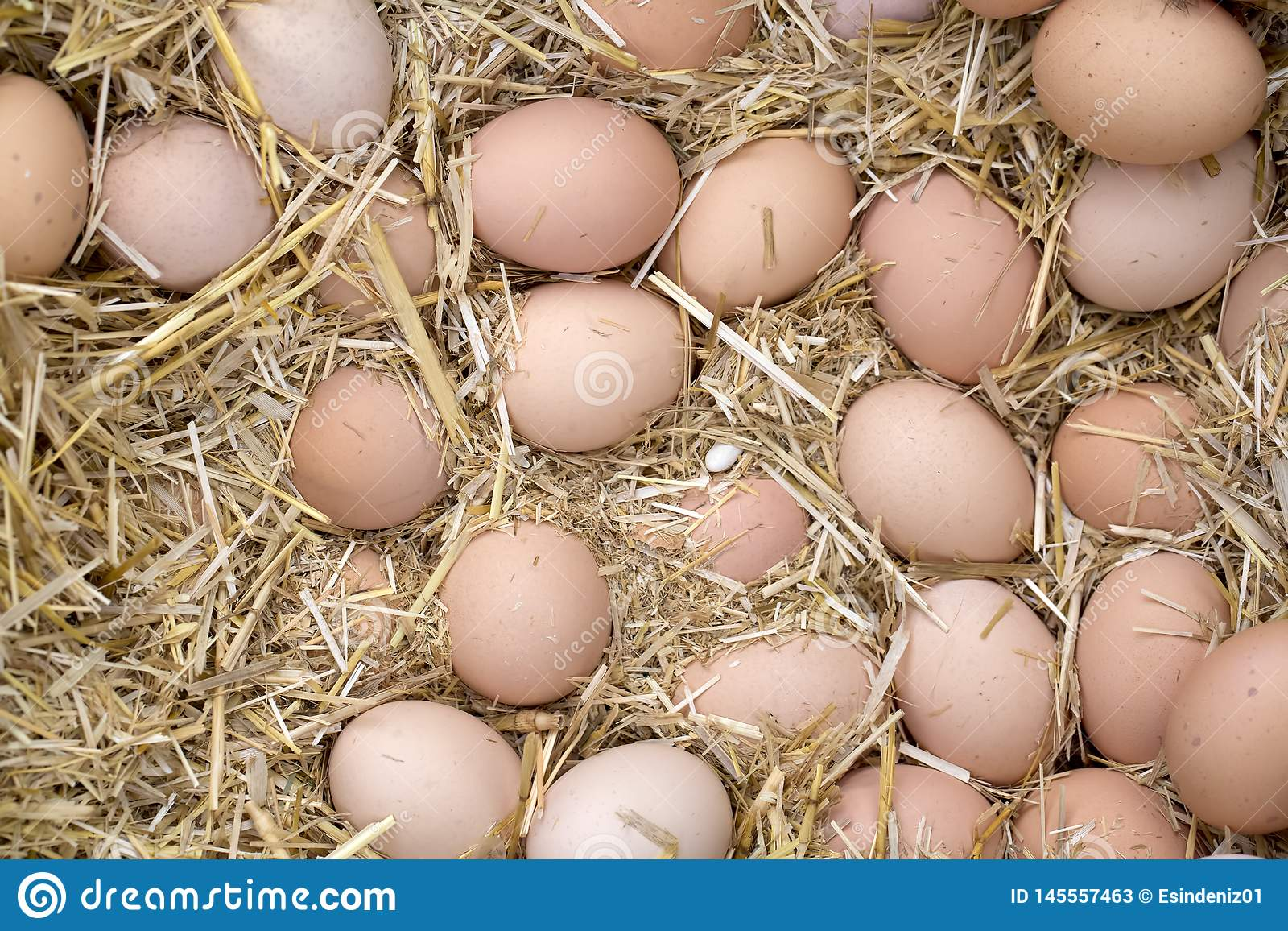Macro shoot of brown / white  eggs at hay nest in chicken farm