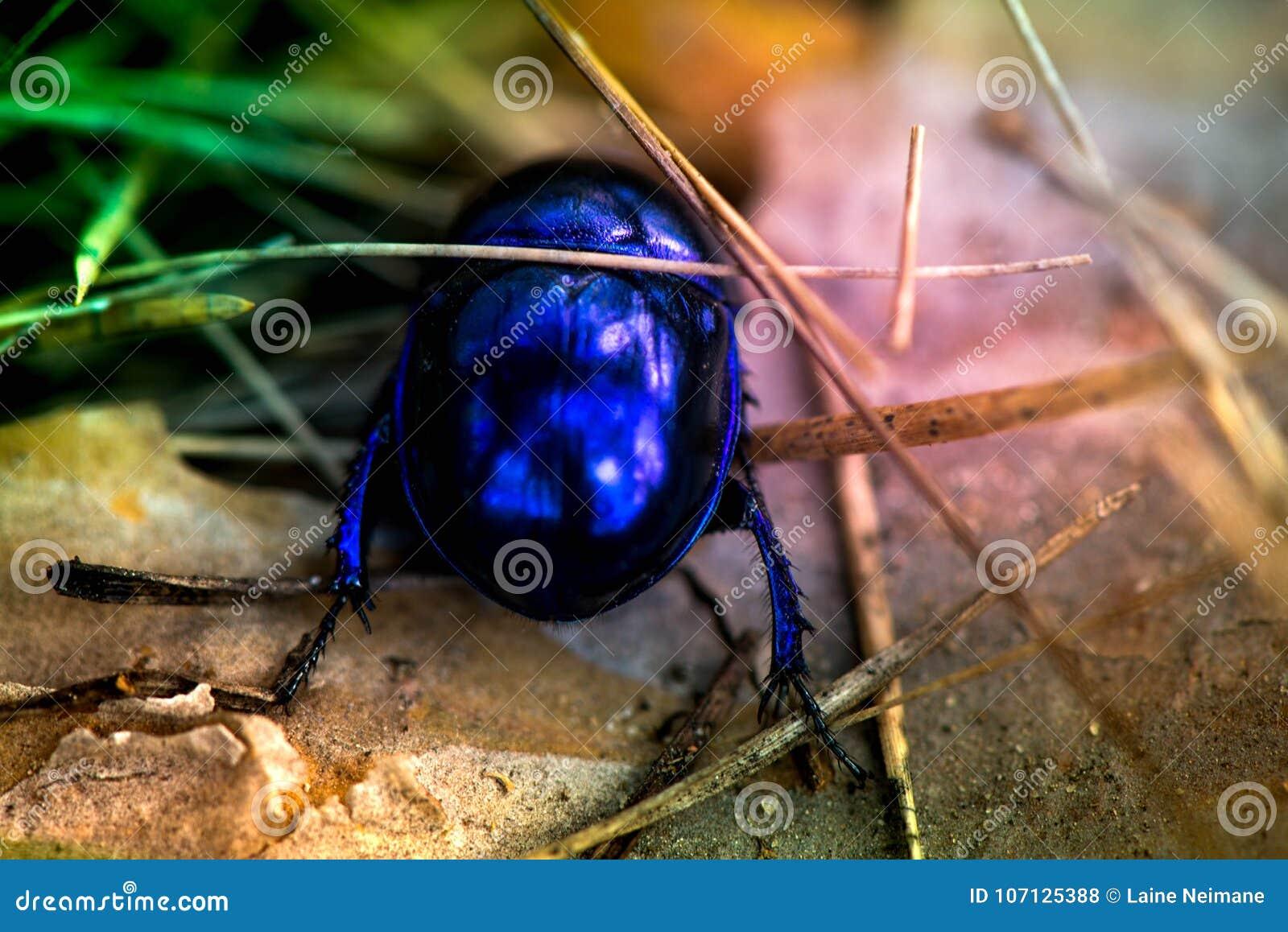 Macro shot of a blue bug