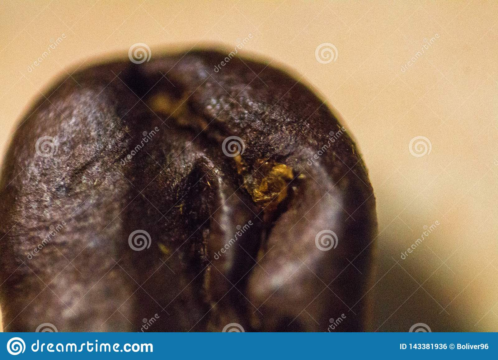 Macro Coffee bean blank background