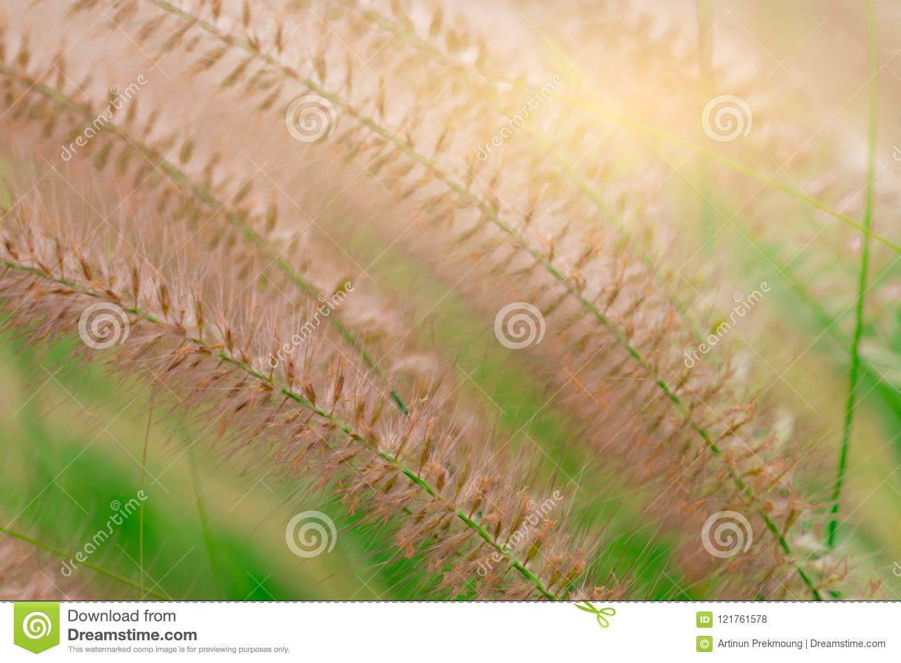 Macro shot detail of beautiful grass flower on blurred green leaves. Background for love peaceful and happy life concept.