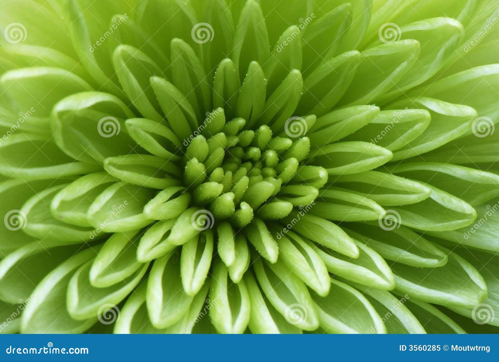 Macro shot of a green flower