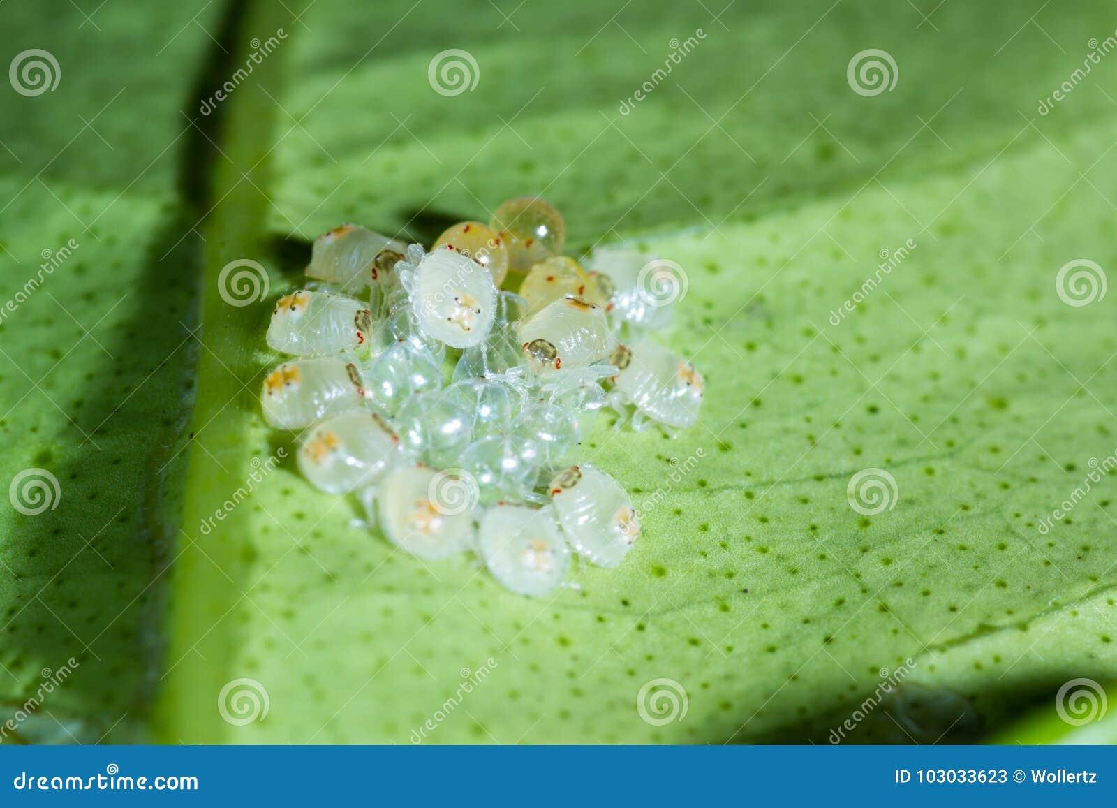 Spider mites macro