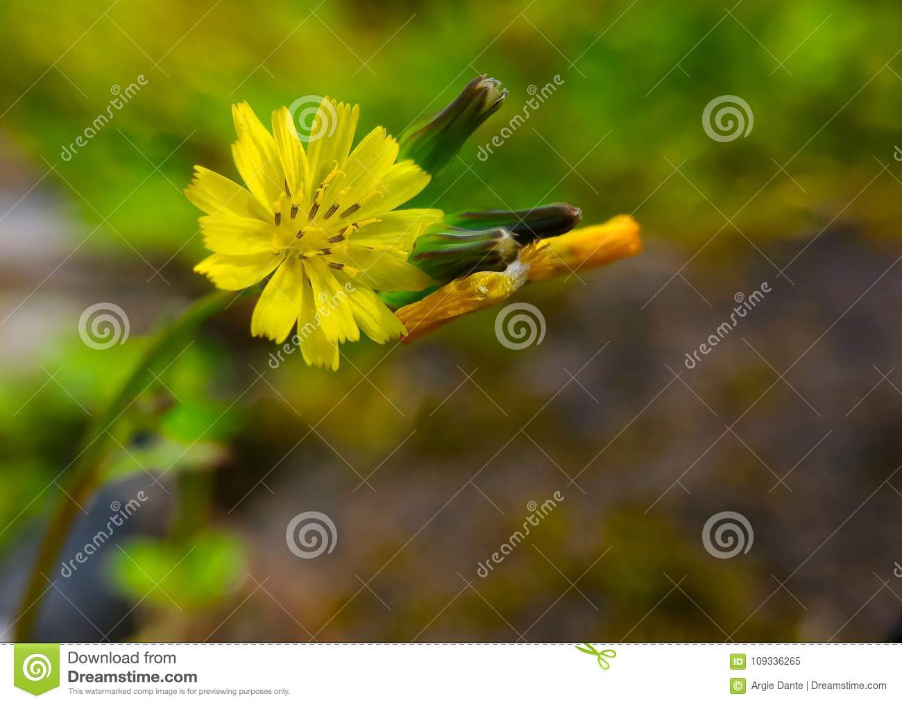 Tiny yellow flower among the grasses stock image image of nature download tiny yellow flower among the grasses stock image image of nature buds mightylinksfo