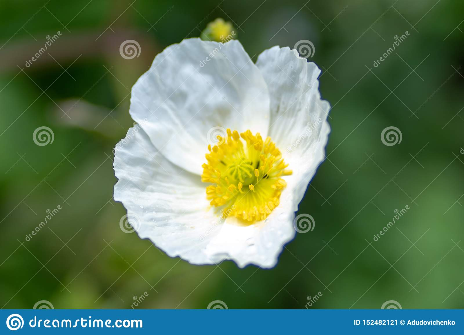 Macro shot of a white flower on a natural background in a soft focus
