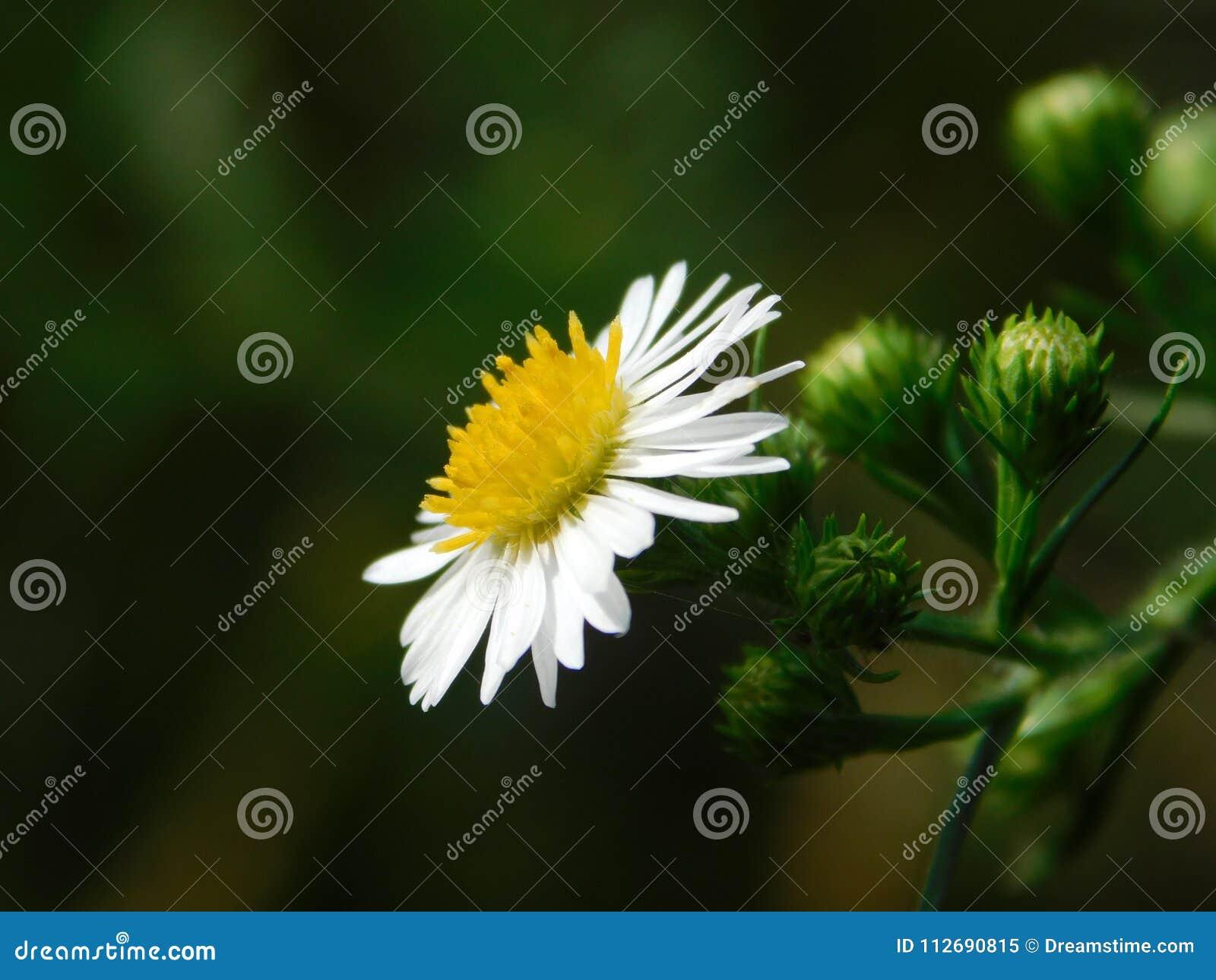 Wild flower on a plant