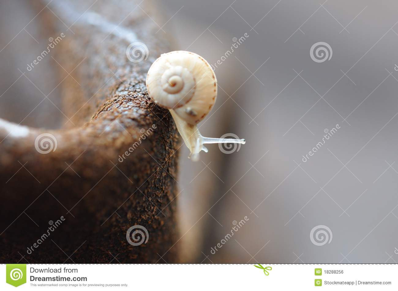Download Macro - Snail stock photo. Image of south, extreem, close - 18288256