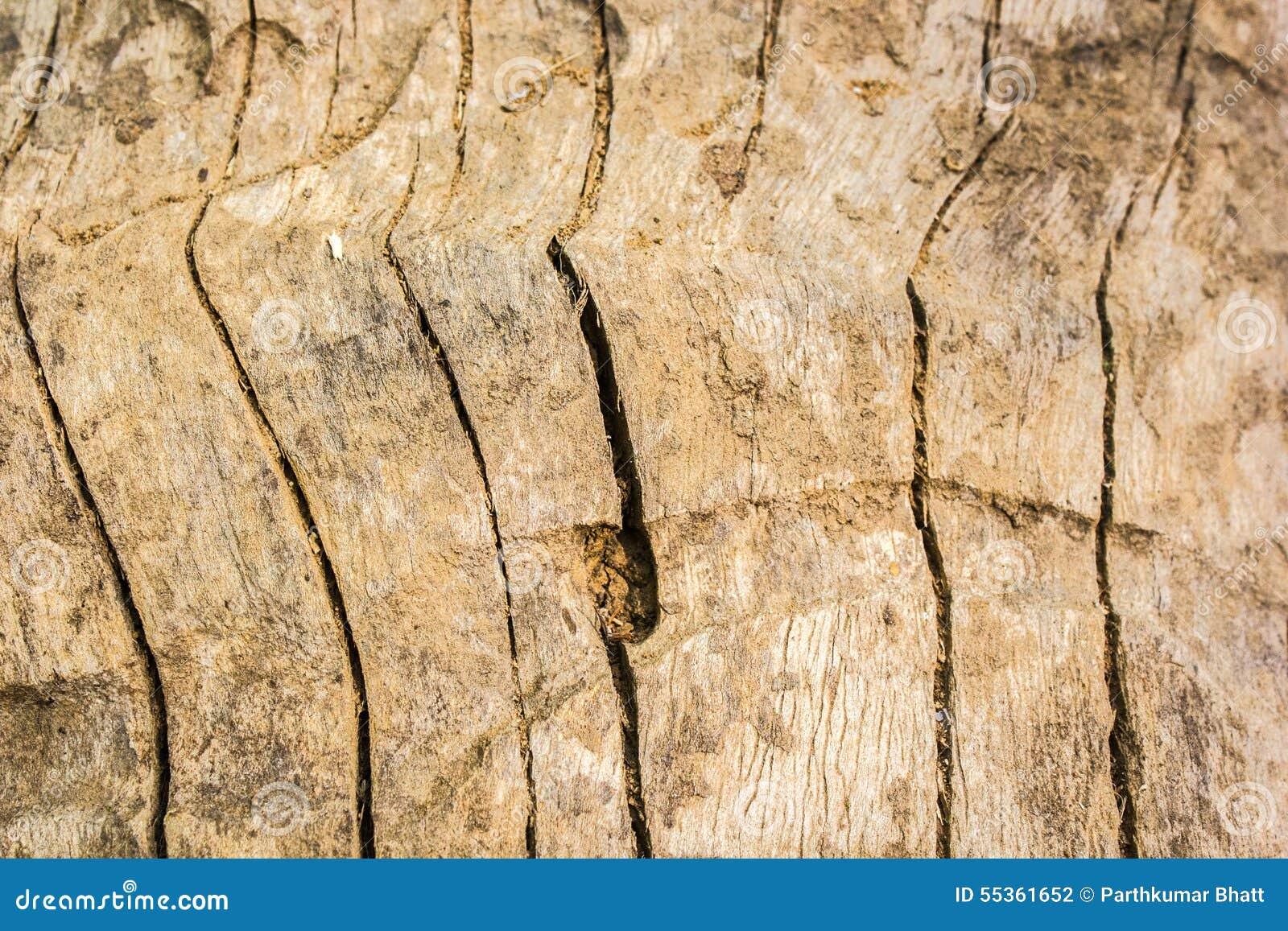 Macro struttura di legno - 5