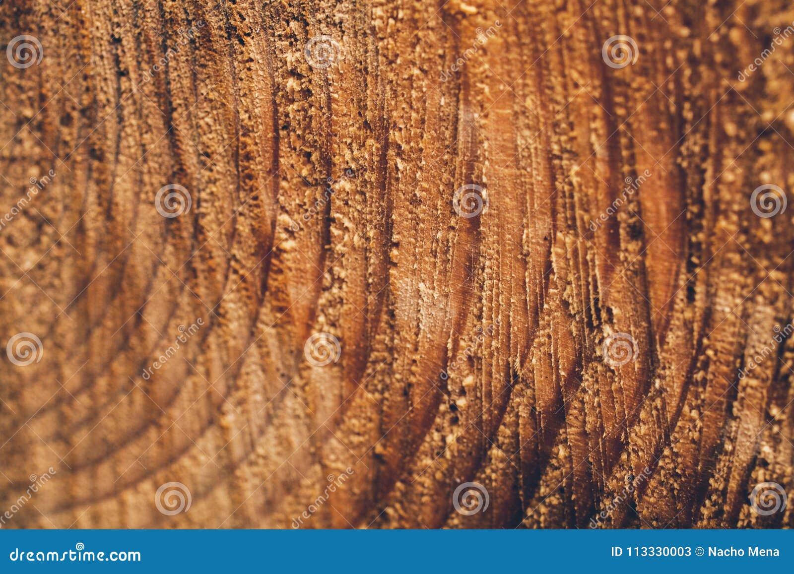 macro texture de tronc d 39 arbre coup tron on de pin texture et fond en bois pour la conception. Black Bedroom Furniture Sets. Home Design Ideas