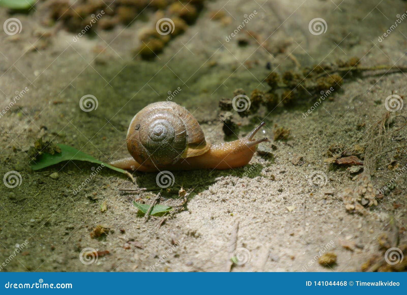 Macro tir d escargot sur la traînée