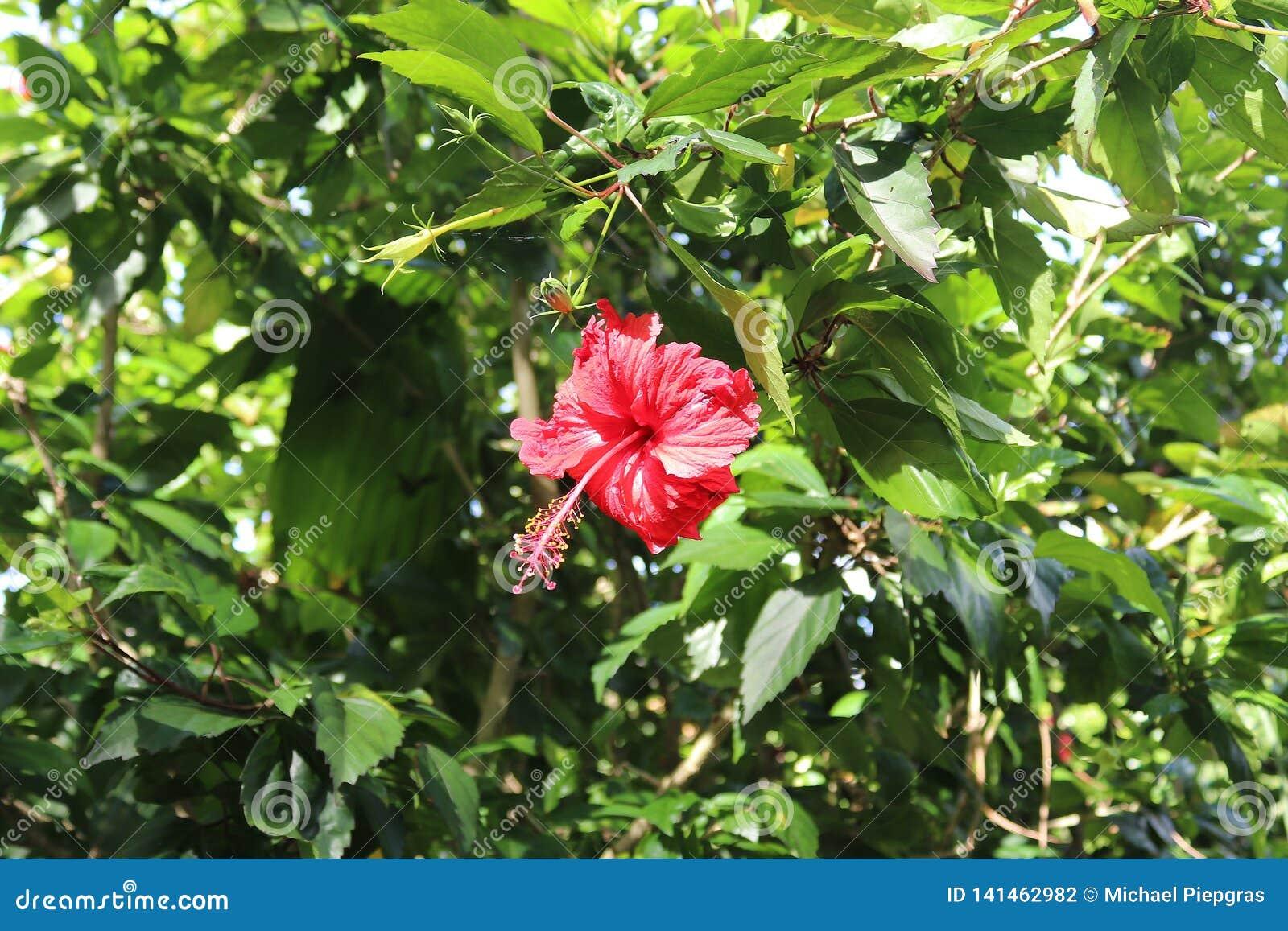 Macro tirs colorés des fleurs sur l île des Seychelles