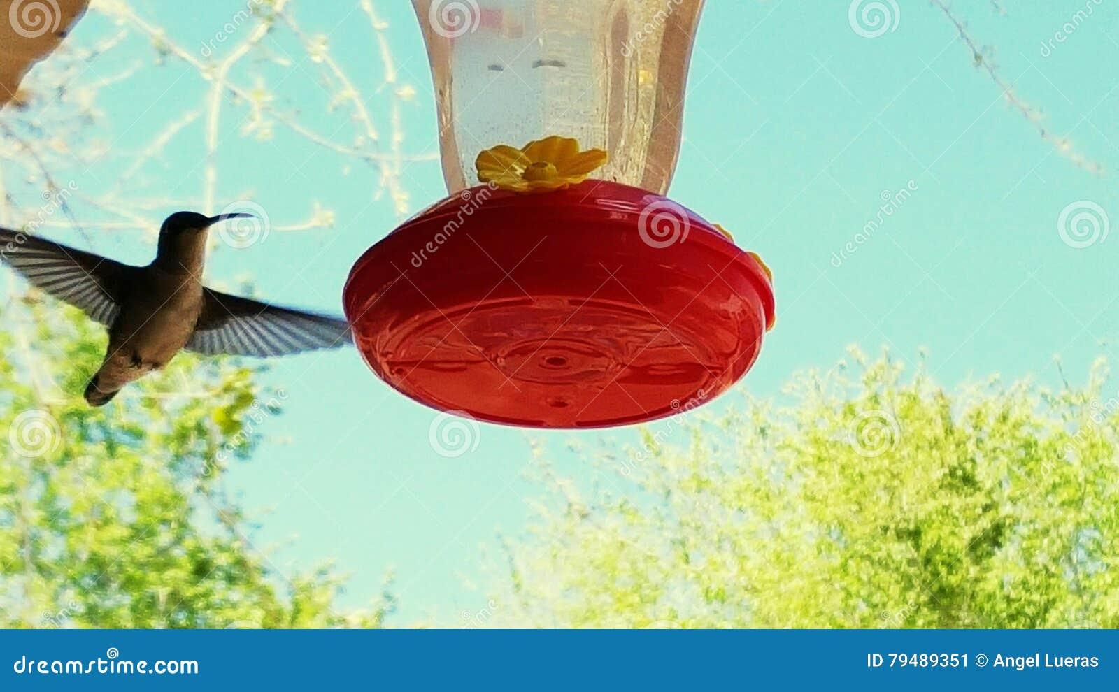 Macro uccello di ronzio del colpo