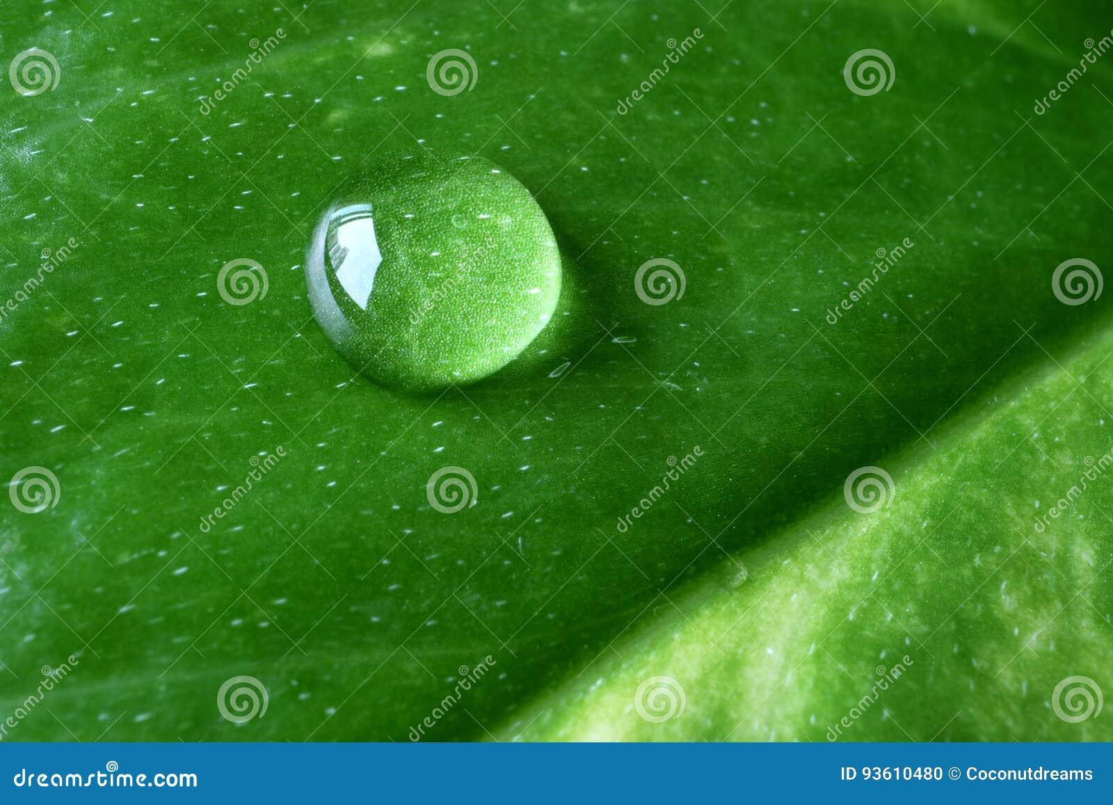 Macro van Crystal Clear Dewdrop op het Trillende Groene Blad, met Selectieve Nadruk wordt geschoten die