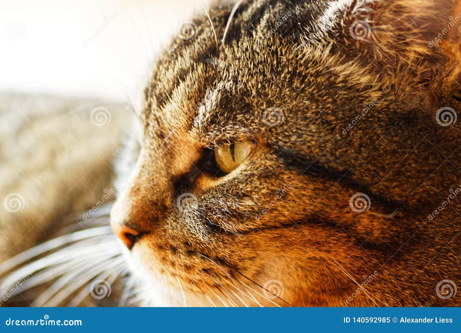 Macro van een mannelijke kat