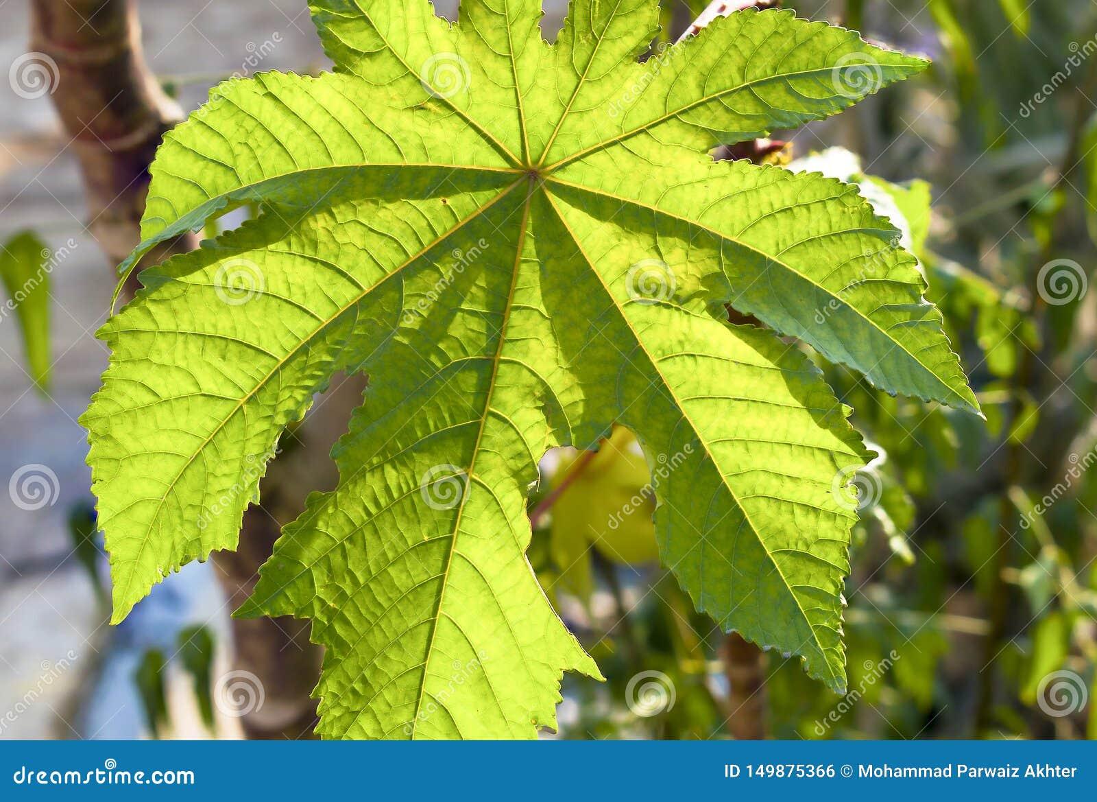 Macro van een mooi groen blad wordt geschoten dat