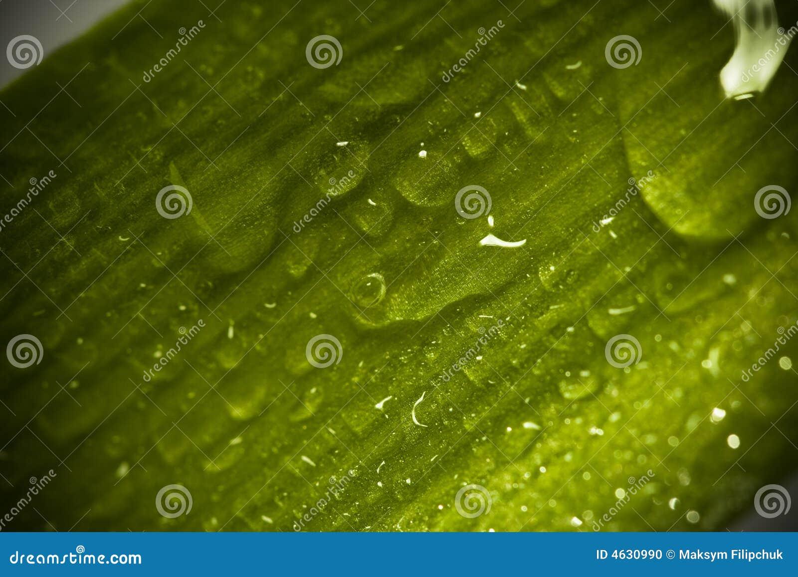 Macro verde fresco