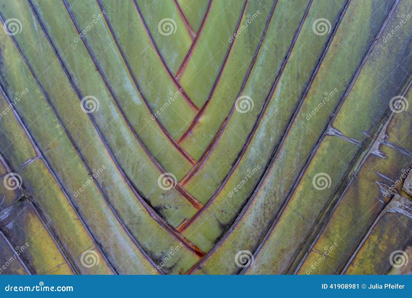 Macro verde tropical del fondo de la palmera