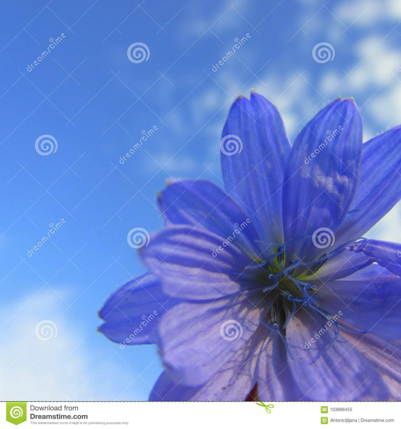 Blue And Violet Beautiful Flower On Blue Sky Background Stock Image