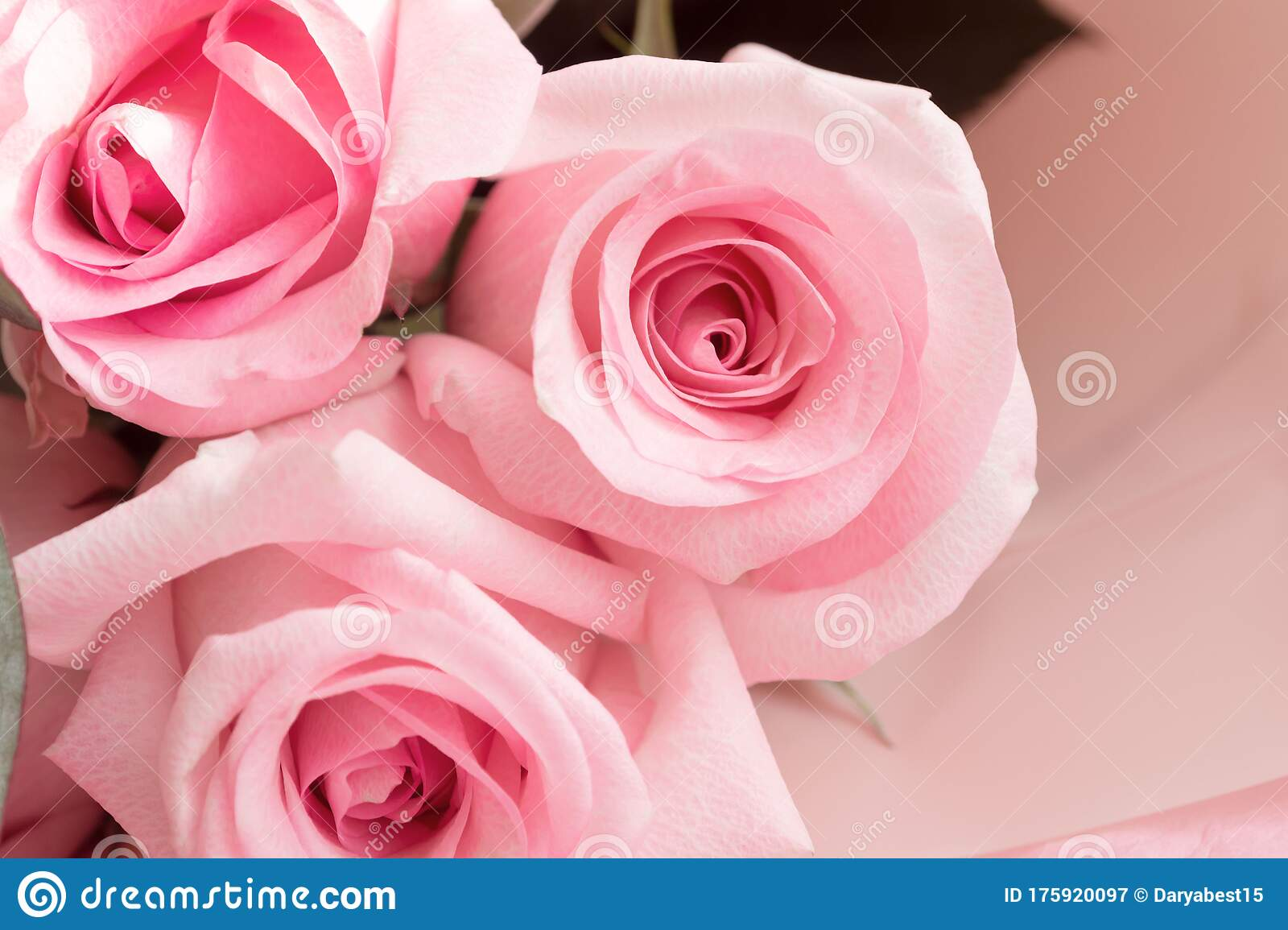 Macro View Of Dusty Pink Rose Flowers In Aesthetic Bouquet Stock Image Image Of Pink Aesthetic 175920097